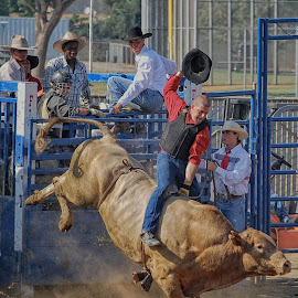 Rodeo At The OC by Jose Matutina - Sports & Fitness Rodeo/Bull Riding ( cowboy, oc, costa mesa, orange county, rodeo, sport, bull )