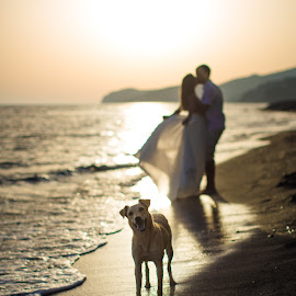 by Alexander Hadji - Wedding Other ( seashore, wedding, sunset, greece, dog, bride )