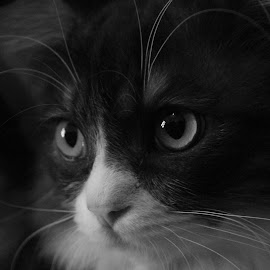 Otis by Black IsBeauty - Animals - Cats Playing