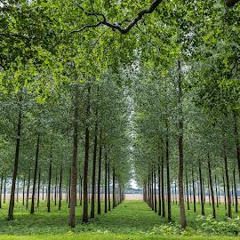 by Antonello Madau - Nature Up Close Trees & Bushes