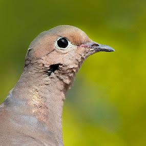 by Paul Brown Jr. - Animals Birds (  )