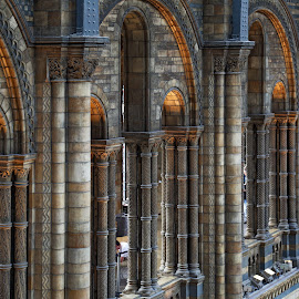 arches at NHM by Almas Bavcic - Buildings & Architecture Architectural Detail