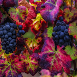 Colors of Fall III by Michel Lorente - Food & Drink Fruits & Vegetables ( fall, color, colorful, nature )