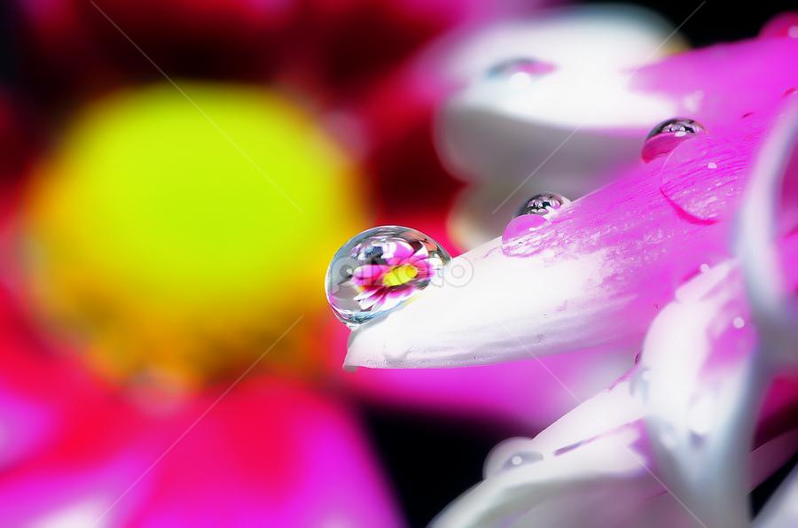water in flower by Muh Isvanora - Nature Up Close Natural Waterdrops