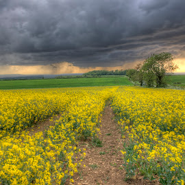 Storm Approaching by John Passmore - Landscapes Prairies, Meadows & Fields ( clouds, stormy, rapeseed, weather, storm, rain, fileds )