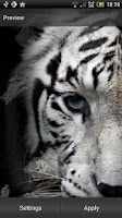 Screenshot of White Tiger Live Wallpaper