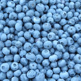 Oregon blueberries by Howard Skaggs - Food & Drink Fruits & Vegetables