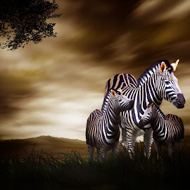 Zebra Horse by Lucky Santika - Digital Art Animals