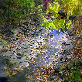 Leaf lined creek by Jennifer Schmidt - Nature Up Close Water ( water, creekbed, fall time, creek, fallen leaves, fall, color, colorful, nature )