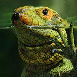 by John Larson - Animals Reptiles