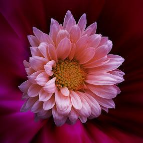 by 3rd eye Monster - Flowers Single Flower