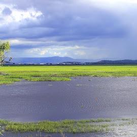 Wetlands by Helen Beggs - Landscapes Prairies, Meadows & Fields ( clouds, water, nature, wetlands, storm, landscape )