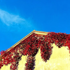 Autumn growing by Žaklina Šupica - Buildings & Architecture Other Exteriors