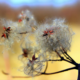 by Eni Zanic - Nature Up Close Other plants