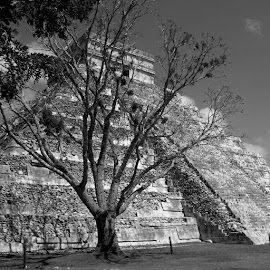 Mexico by Veronica D'Andrea - Buildings & Architecture Statues & Monuments (  )
