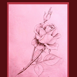 by Ingrid Anderson-Riley - Drawing All Drawing