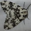 Lymantria Moth