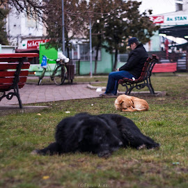 by Făsui Alex - Novices Only Pets ( dogs, buzau )