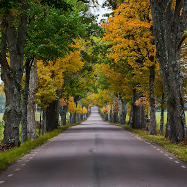 Avenue in fall at Brevens Bruk, Sweden. by Per-Ola Kämpe - Landscapes Travel ( tree, autumn, green, avenue, fall, trees, yellow, road, landscape )