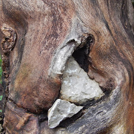 tree that breaks the rock by Marijan Alaniz - Nature Up Close Trees & Bushes (  )