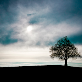 Lonely tree by Mirza Cosic - Landscapes Cloud Formations ( lonely tree )