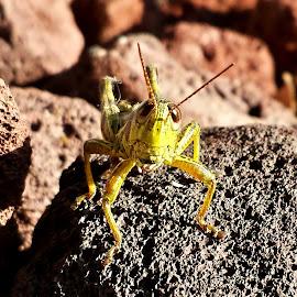 grasshopper by Marta Raczkowska-Radkiewicz - Instagram & Mobile Android