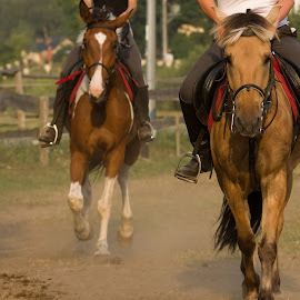Horse race by Aneta Helwich - Animals Horses ( rider, horses, horse, race, mammal, animal )