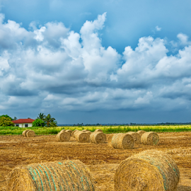 Paddy Straws by KIN WAH WONG - Landscapes Prairies, Meadows & Fields ( clouds, paddy field, paddy straws, sekinchang, malaysia, scenery, landscape )