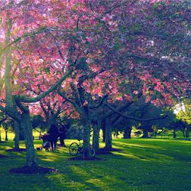Evening light at Cornwell park Auckland by Anupam Hatui - City,  Street & Park  City Parks ( photogrphy, park, spring, light,  )