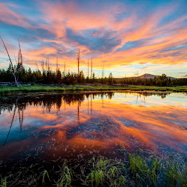 Just south of canyon campground in Yellowstone National Park in Wyoming by Shaun Peterson - Landscapes Sunsets & Sunrises