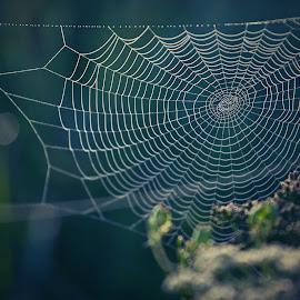 * * * by Katka Kozáková - Nature Up Close Webs