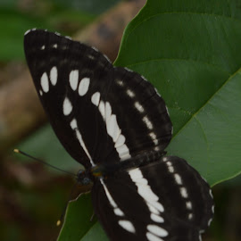 black and white by Casterino Rio - Novices Only Macro ( butterfly, black and white, green, plants, garden )