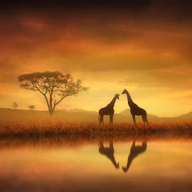 Dreaming of Africa by Jennifer Woodward - Digital Art Animals ( water, animals, nature, sunset, safari, wildlife, silhouettes, reflections, sunrise, africa, giraffes )