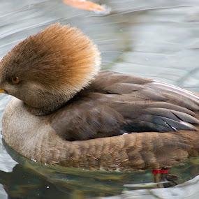 by Charles Ward - Animals Birds