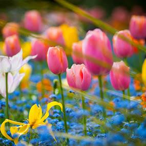 Flowers by Derek Robinson - Flowers Flower Gardens ( nikon d90 sigma flowers zoom )