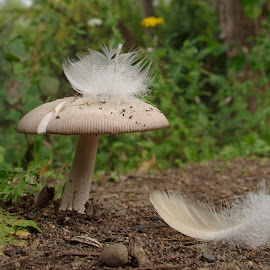 by Joseph Muller - Nature Up Close Mushrooms & Fungi (  )
