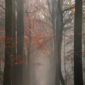 Misty in the forest by Pascale Schotte - Landscapes Forests ( bruges, trees, belgium, forest, landscape, light, misty )