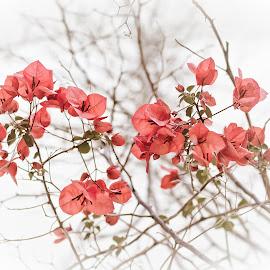 Flowers by Thodoris Karakozidis - Wedding Details ( canon, red, green, greece, canvas )
