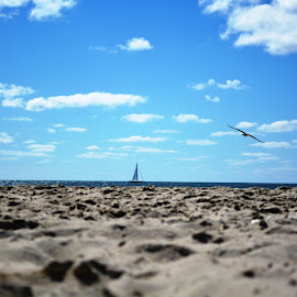 Michele Gambone Photography by Michele Gambone - Landscapes Beaches ( sky, seagull, waves, ocean, beach )