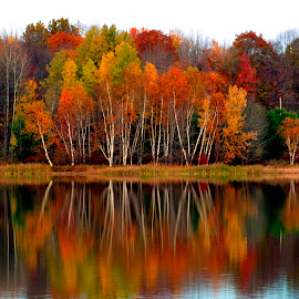 Brilliant Autumn Colors On The Lake by Gene Walls - Landscapes Forests ( water, birch, rose valley lake, nature, autumn, fall, trees, reflections, lake, pond,  )