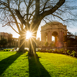 Palace of Fine Arts by Jerome Obille - City,  Street & Park  City Parks ( public park, tourist spot, tree silhouette, lawn, grass, shadow, architecture, palace of fine arts, san francisco, garden, sun rays )