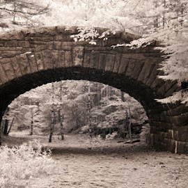Stone bridge Acadia National Park. by Gale Perry - Buildings & Architecture Bridges & Suspended Structures