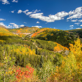 Lime Creek Burn Area by Nancy Young - Landscapes Mountains & Hills ( molas, million dollar highway, durango, 2014, ouray, colors, aspens, coalbank )