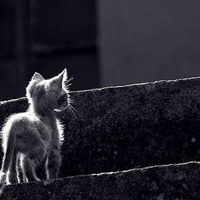 by Ante Gašpar - Animals - Cats Portraits ( black and white )