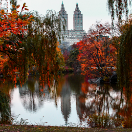Central Park in Fall by Gina Gomez - City,  Street & Park  City Parks ( new york central park, park, central park views, central park photo, central park landscape, central park, photos of central park, view of central park, nyc central park, pictures of central park, central park picture, new york parks, central park trees, central park photograph, central park print, images of central park )