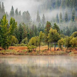 Mystic White Pines by Paul Judy - Landscapes Mountains & Hills ( fog, california, lake, arnold, mist )