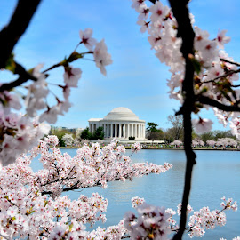 Jefferson Memorial, DC by Mithun Das - Buildings & Architecture Statues & Monuments