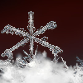 king by Ondrej Pakan - Nature Up Close Other Natural Objects ( macro, winter, ice, snow, snowflake,  )