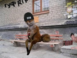 Screenshot of Stoned Fox: Internet Meme Make