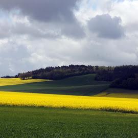Yellow landscape by Michael Moore - Landscapes Travel ( landscape )